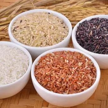Les 4 nuances de riz du riz IGP bio de Camargue: en bas à gauche, le riz blanc