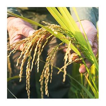 """riz blanc bio  de Camargue 5 kg protégé par L'IGP """"riz de Camargue"""""""